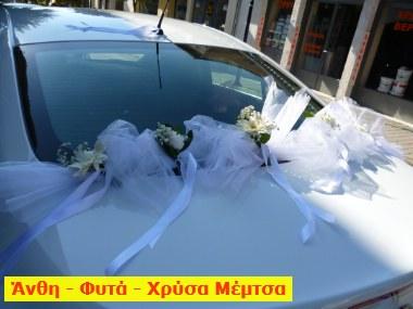 xrysaP1000430