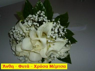 xrysaP1000439
